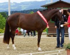 Pferdefestival